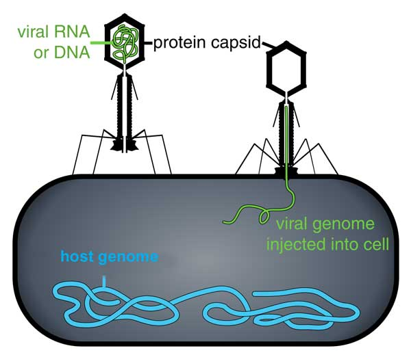 histoire de la thérapie génique